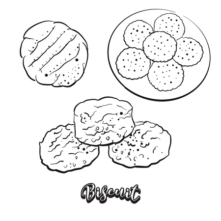 Hand drawn sketch of Biscuit bread. Vector drawing of Yeast bread or unleavened food, usually known in North America and Europe. Bread illustration series.