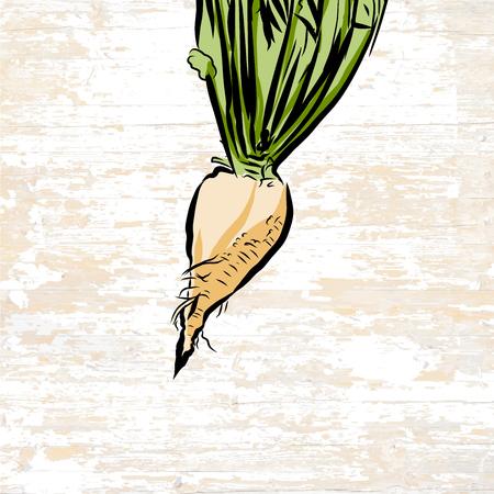 Hand drawn illustration of sugar beet. Vector food drawing. Vetores