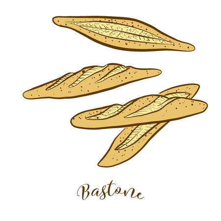 Colored sketches of Bastone bread. Vector drawing of Yeast bread food, usually known in Italy. Colored Bread illustration series.