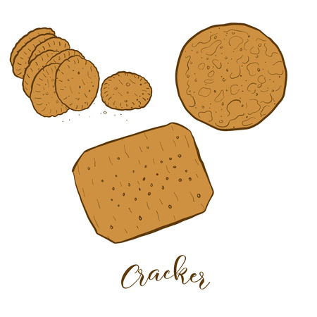Colored sketches of Cracker bread. Vector drawing of Crispy bread food, usually known in International. Colored Bread illustration series.