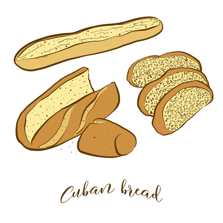 Colored sketches of Cuban bread bread. Vector drawing of Yeast bread food, usually known in United States. Colored Bread illustration series.