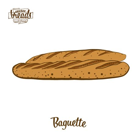 Baguette bread. Vector illustration of Yeast bread food, usually known in France. Colored Bread sketches.