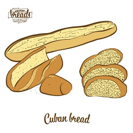 Cuban bread bread. Vector illustration of Yeast bread food, usually known in United States. Colored Bread sketches. Illustration