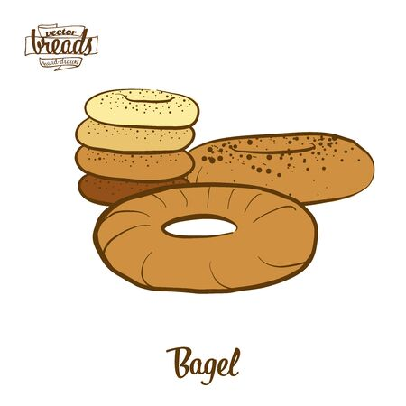 Bagel bread. Vector illustration of Yeast bread food, usually known in Polish, Ashkenazi, Jewish. Colored Bread sketches.