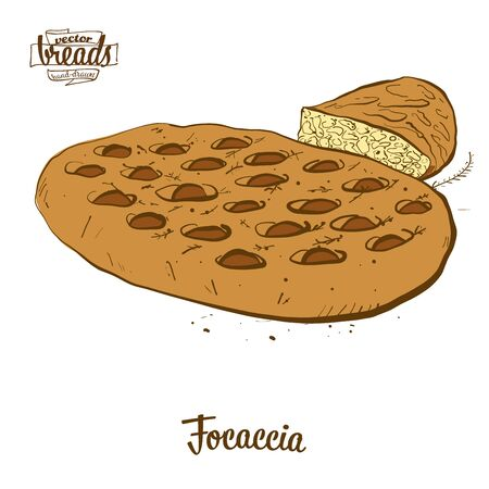 Focaccia bread. Vector illustration of Yeast bread food, usually known in Italy. Colored Bread sketches.