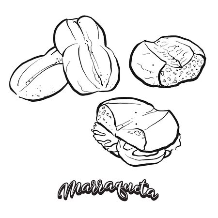 Marraqueta food sketch separated on white. Vector drawing of Leavened, lobed loaf, usually known in Chile. Food illustration series.