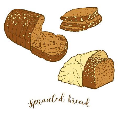 Colored drawing of Sprouted bread bread. Vector illustration of Sprouted food, usually known in Europe. Colored Bread sketches.