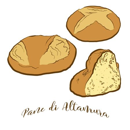 Colored drawing of Pane di Altamura bread. Vector illustration of Leavened food, usually known in Italy. Colored Bread sketches.