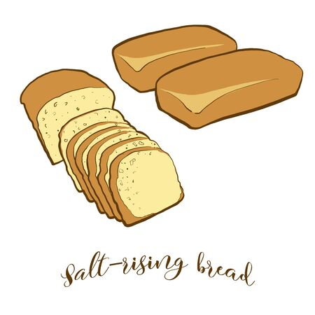 Colored drawing of Salt-rising bread bread. Vector illustration of Leavened food, usually known in United States. Colored Bread sketches.