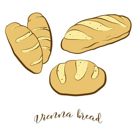 Colored drawing of Vienna bread bread. Vector illustration of Leavened food, usually known in Austria, Vienna. Colored Bread sketches.