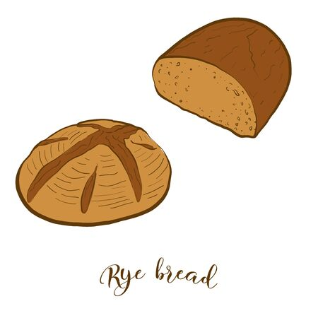 Colored drawing of Rye bread bread. Vector illustration of Leavened food, usually known in Europe, America, Israel. Colored Bread sketches.