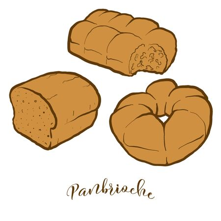 Colored drawing of Panbrioche bread. Vector illustration of Leavened food, usually known in Italy. Colored Bread sketches.