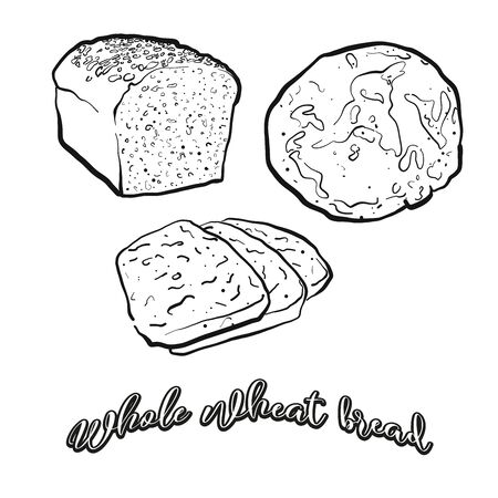 Whole wheat bread food sketch separated on white. Vector drawing of Leavened, usually known in Europe, USA. Food illustration series.