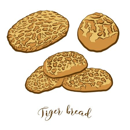 Colored drawing of Tiger bread bread. Vector illustration of Rice bread food, usually known in Netherlands. Colored Bread sketches.