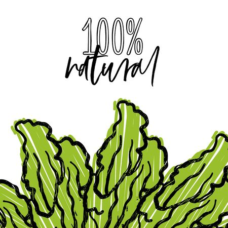 100% natural lettering and Lettuce advertising template. Hand drawn Illustration, handwritten on white background.