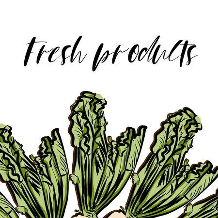 Fresh products lettering and Sugar Beet advertising template. Hand drawn Illustration, handwritten on white background. Illustration