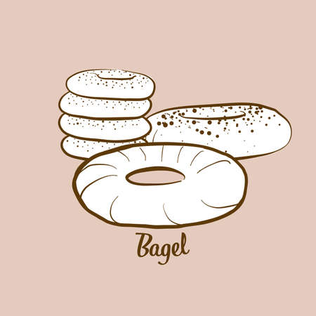 Hand-drawn bagel bread illustration. Yeast bread, usually known in Polish, Ashkenazi, Jewish. Vector drawing series.