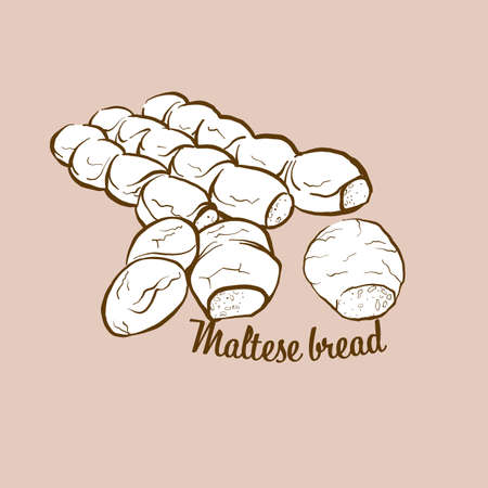 Hand-drawn Maltese bread bread illustration. Sourdough, usually known in Malta. Vector drawing series.
