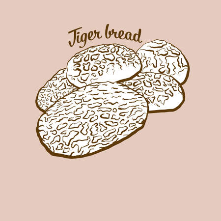 Hand-drawn Tiger bread bread illustration. Rice bread, usually known in Netherlands. Vector drawing series.