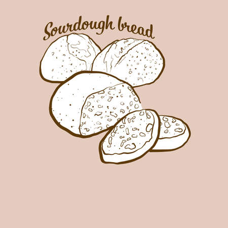 Hand-drawn Sourdough bread bread illustration. Sourdough, usually known in Fertile Crescent. Vector drawing series. Imagens - 155911057