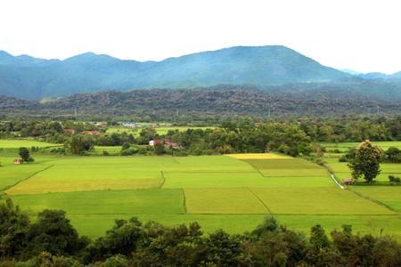 Rice field at Wang Weang, Lao P.D.R. Stock Photo