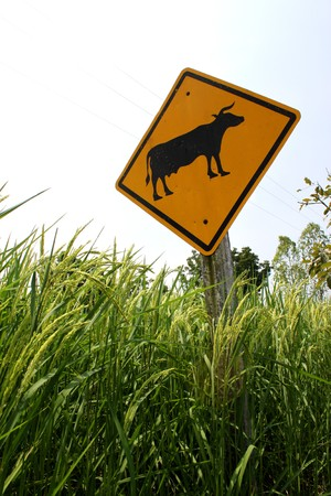 Rice Field and Traffic Sign photo