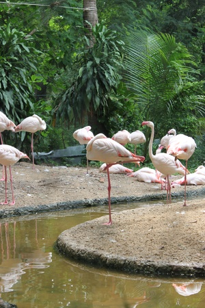 Pink flamingos Stock Photo - 9608345