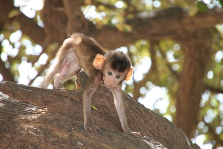 Long-tailed Macaque Stock Photo - 9857918