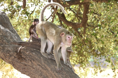 Long-tailed Macaque Stock Photo - 9857920