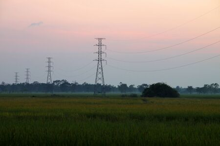 A picture of high voltage electricity posts in jasmine rice field before sunset photo