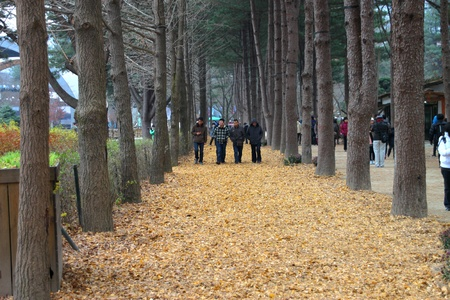 NAMINARA REPUBLIC, KOREA - NOVEMBER 26 : The unidentified tourists are traveling to attraction places on November 26, 2011 at Nami island, Naminara Republic, Korea.