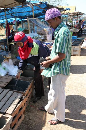 PAYAKKAPHUMPHISAI, MAHASARAKHAM - JANUARY 1 : The unidentified man is buying fresh fishes on January 1, 2012 at outdoor fishes market, Payakkaphumphisai, Mahasarakham, Thailand. Stock Photo - 11728823