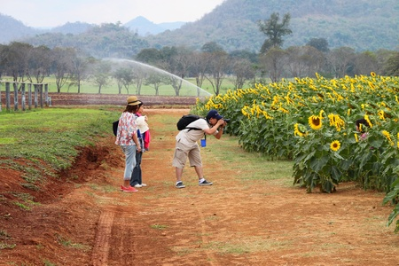 PAK CHONG, KORAT, THAILAND - JANUARY 15 : The unidentified tourists are visiting famous rural farmland on January 15, 2012 at Chok Chai Farm, Pak Chong, Korat, Thailand. Stock Photo - 11987854