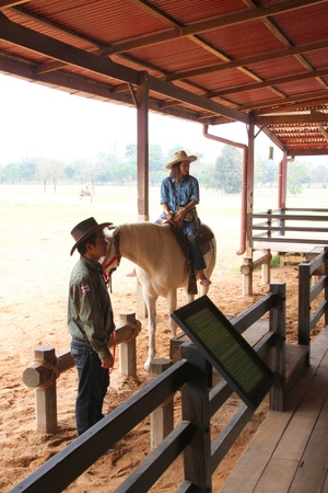 persuading: PAK CHONG, KORAT, THAILAND - JANUARY 15 : The unidentified cowboy is persuading tourists to ride a horse on January 15, 2012 at Chok Chai Farm, Pak Chong, Korat, Thailand.