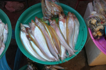 a rural community: Fresh fishes in rural open community market