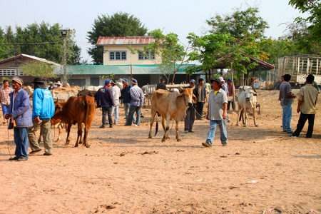 NACHAUK, MAHASARAKHAM, THAILAND - MARCH 15 : The unidentified men are selling and buying cows on March 15, 2012 at Nong Kung cattle market, Nachauk, Mahasarakham, Thailand.