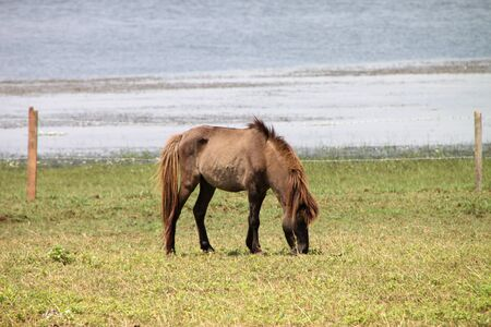 catchment: A horse is in country grass field
