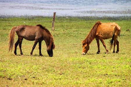 catchment: Two horses are in country grass field