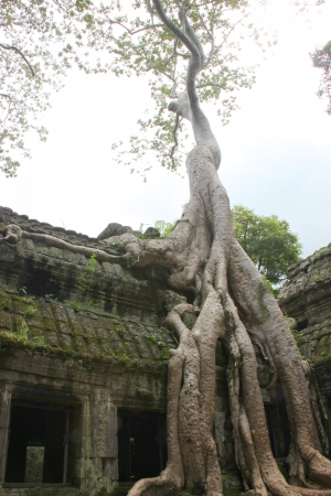 Ancieht Ta Prohm Prasat, Siamreap, Khmer Republic photo