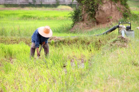 Farmer is working in rural plantation, Thailand