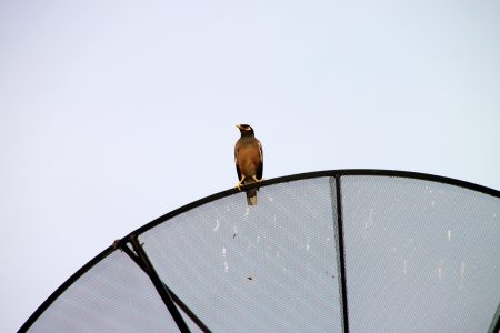 Bird on telecommunication dish and antenna against the sky photo