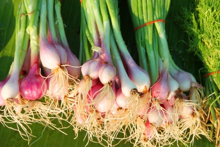 clustered: Shallots - small mild-flavored onion-like clustered bulbs used for seasoning and stems used for side dish