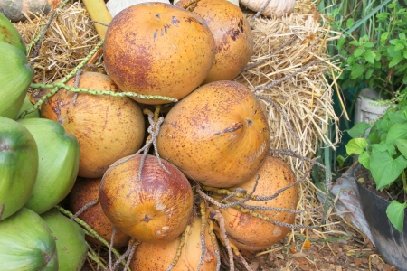 country store: Coconuts bunch on the ground in tropical fruits market