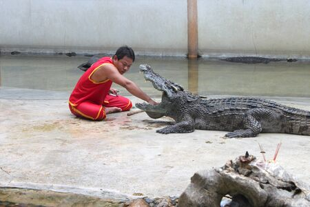 SAMUT PRAKAN, THAILAND - OCTOBER 17 : Unidentified man is performing in playing with crocodile show on October 17, 2010 at crocodile farm, Samut Prakan, Thailand.