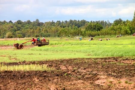 NACHUAK, MAHASARAKHAM - AUGUST 26 : Unidentified farmers are going to work in farm on August 26, 2012 at Huai Koh lake, Nachuak, Mahasarakham, Thailand.
