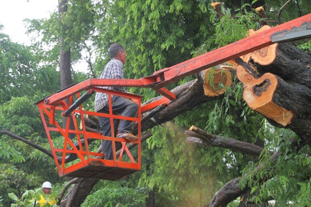 MUANG, MAHASARAKHAM - AUGUST 29 : Unidentified rescue teams are taking trees fallen down after storm damage away from road on August 29, 2012 at Bua Koh Village, Muang, Mahasarakham, Thailand. Stock Photo - 14998247