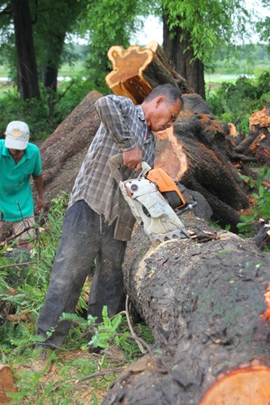 MUANG, MAHASARAKHAM - AUGUST 29 : Unidentified rescue teams are taking trees fallen down after storm damage away from road on August 29, 2012 at Bua Koh Village, Muang, Mahasarakham, Thailand.