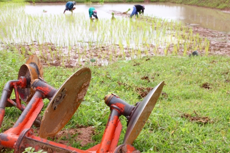 plough land: Plowing tool on the ground and farmers growing rice in background