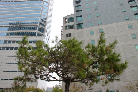 commercial tree service: Big building for shopping and business in Dongdaemun market, South Korea