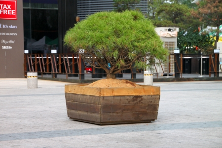 commercial tree service: Park area in Dongdaemun market, South Korea